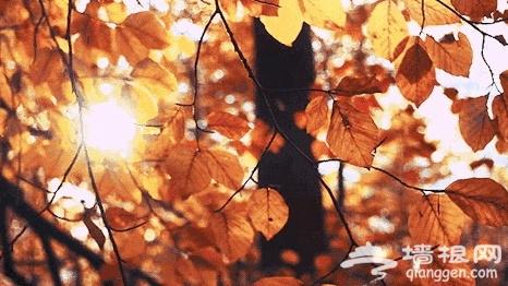 """京郊的""""小九寨""""已进入最美深秋,一步一景美到哭!"""