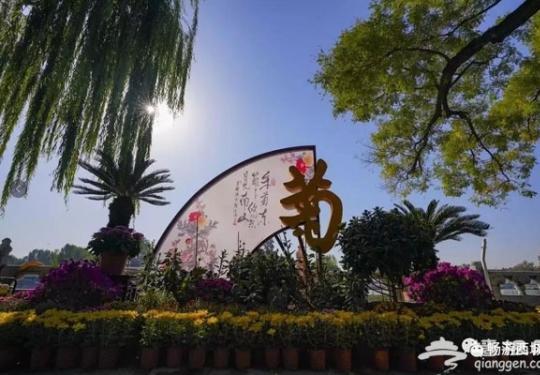 美翻了!北京第39届菊花展,错过又要等一年……