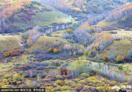 京北第一草原有多美?森林、草原、湖泊、湿地全都有