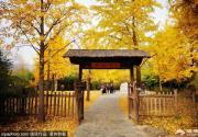北京公园秋色:看看颐和园、植物园、园博馆有多美!