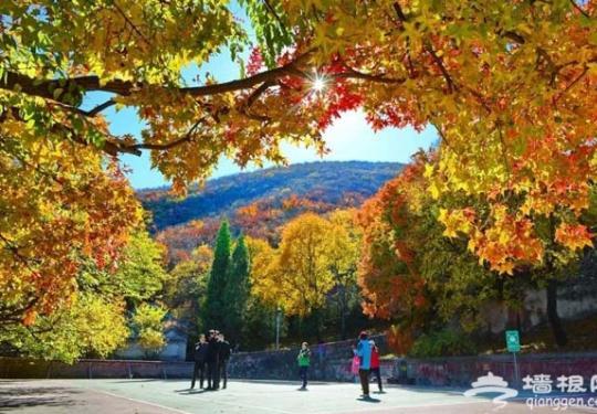 深秋来京西门头沟赏红叶观彩灯