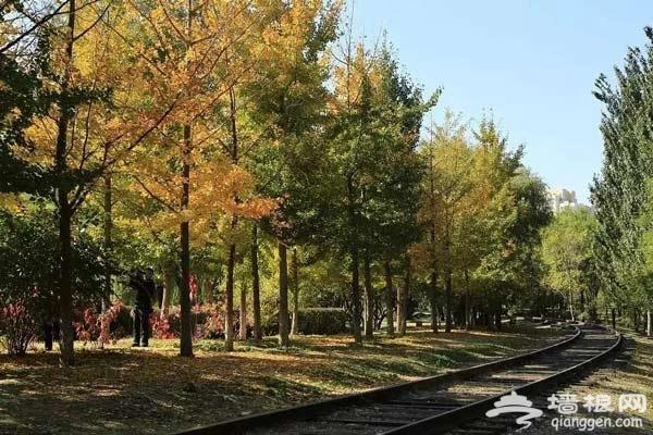 京城竟藏了一座绝美的冷门公园,连女神郭碧婷都跑来拍照打卡![墙根网]