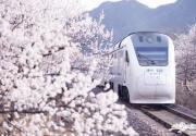 """明年春,北京昌平""""花海列车""""新增观景平台"""