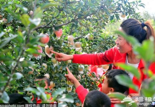 北京周边106家经过安全认证的苹果、柿子采摘园,赶快收藏!
