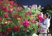 红螺寺新增两处花卉观赏区
