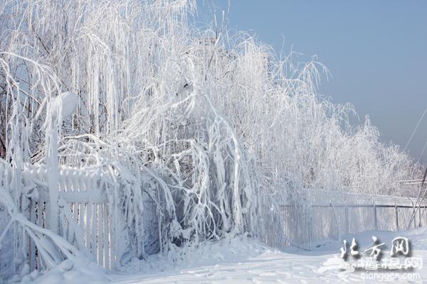 冰雪旅游季大幕拉开 天津各大玩雪项目陆续上线[墙根网]