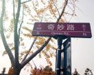 上海国际旅游度假区网红银杏大道美到爆 一起来打卡