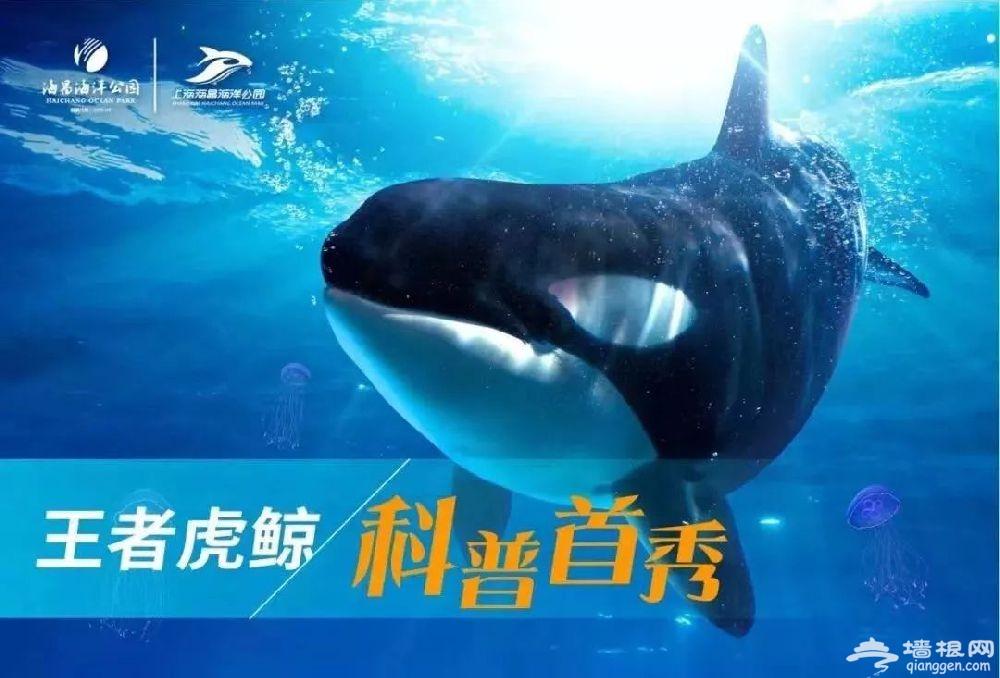 2018上海海昌海洋公园极地冰雪节12月22日开幕[墙根网]