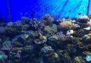 2018北京富国海底世界门票+交通+表演时间