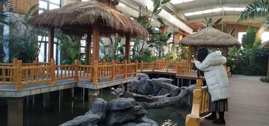 南宫百鸟乐园元旦将亮相 丰台首个水禽科普园落户五洲植物园