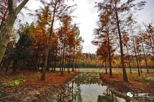 上海又有一座美美的免费郊野公园开放了,收好游园指南[墙根网]