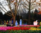 """北京世界公园举办""""2019新春花灯大拜年""""游园活动"""