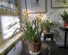 京城公园花卉展,赏花赏景迎新春