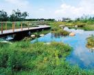 南苑森林濕地公園 打通區域生態廊道