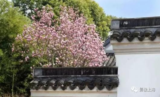 这座有400多年历史的沪上古典园林 你去过吗?[墙根网]