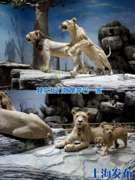 上海科技馆、自然博物馆将闭馆3天,初一到初六开放![墙根网]