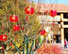 丰台南宫新春游园灯光夜大年初二举行 120组花灯亮相