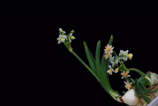 让你拍照拍到没内存!四季如春的大花园,又多了69个梦幻景点![墙根网]