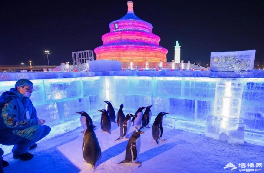2019哈尔滨冰雪大世界企鹅活动时间