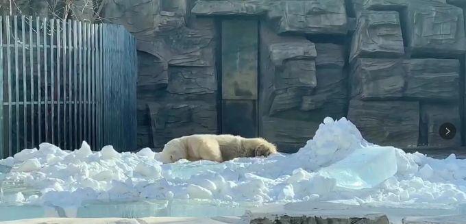 """北京动物园北极熊兽舍变身冰雪世界 打造""""冰雪嘉年华"""""""