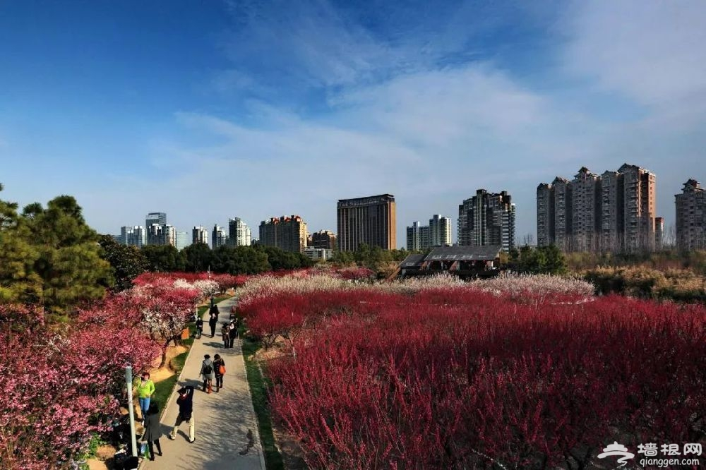 2019上海世纪公园赏梅游园会时间、门票[墙根网]