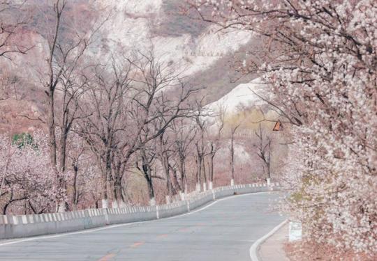 昌赤路、高芹路:北京春季最美赏花路