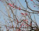 2019初春上海静安赏花好去处推荐 多个公园可赏梅