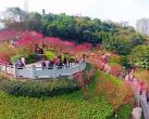 2019重庆彩云湖湿地公园梅花观赏攻略