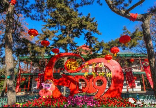 2019北京动物园猪年生肖文化活动时间、内容、门票价格