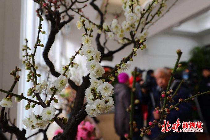 """北京中山公园""""玉猪临门""""春节系列活动 展出精品花卉70余种[墙根网]"""
