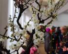 """北京中山公园""""玉猪临门""""春节系列活动 展出精品花卉70余种"""