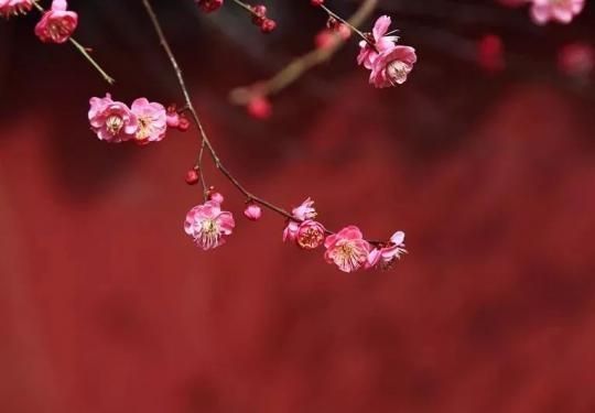 北京赏花信息汇总