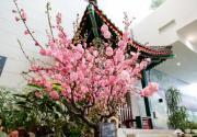 2019中國園林博物館元宵節活動(時間+亮點+預約)