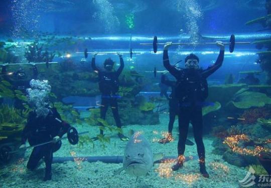 """上海海昌海洋公园情人节上演水下""""为爱负重""""蔚蓝海底浪漫出击"""