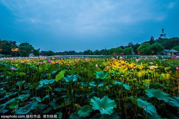 2019北京各地赏花攻略大全(附花期)[墙根网]