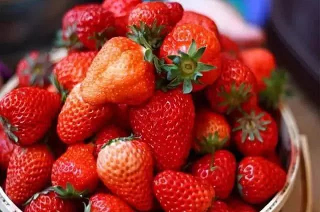 昌平木林森农业休闲观光公园草莓采摘活动(时间+地点+价格)[墙根网]