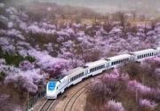 北京的櫻花快要開了,我們在哪里見?