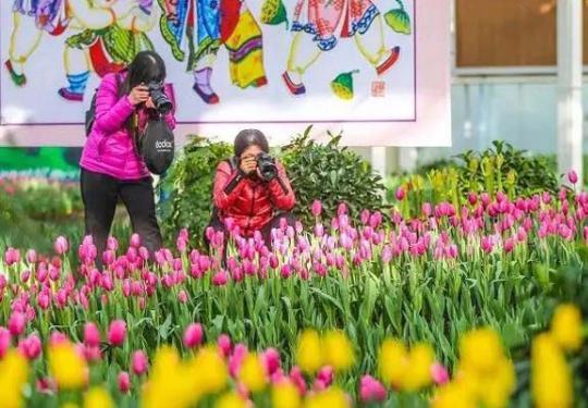 2019顺义迎春花展持续至2月25日