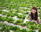 上海草莓采摘