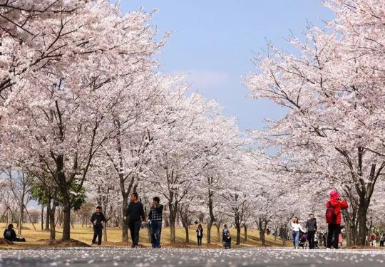 早春慢游松江的六种方式 感受不一样的慢生活