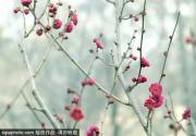 梅花開了!北京唯一以梅為特色的景點,已成花海!