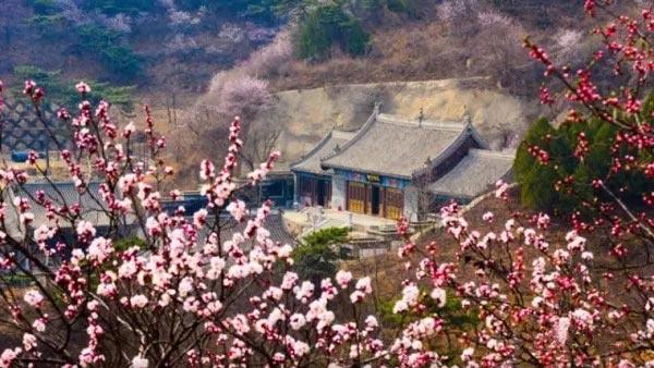 2020北京春季赏花指南:桃花[墙根网]