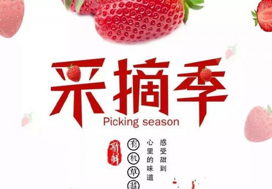 2019上海白鹤草莓节(时间+地点+活动攻略)