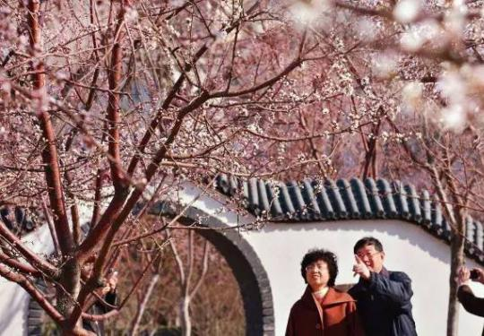 2019天津运河桃花节(时间+地点+门票)