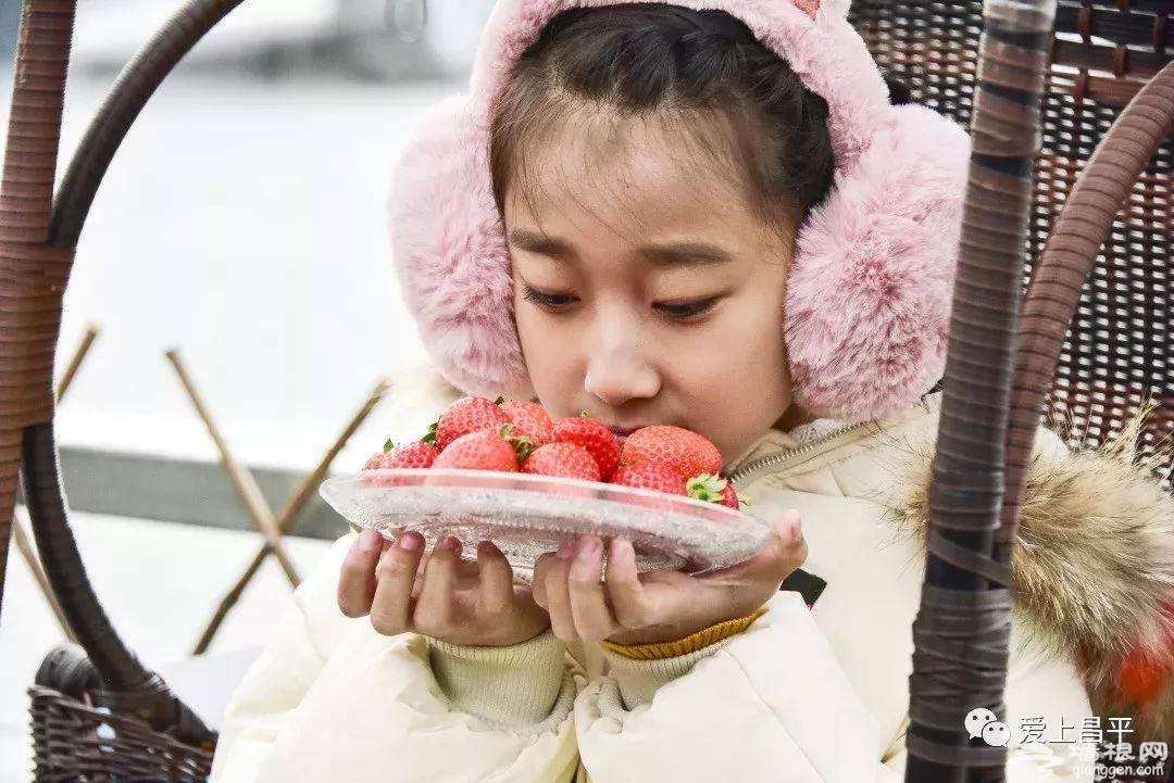 2019昌平最新草莓采摘地图出炉!甜得不像话~[墙根网]