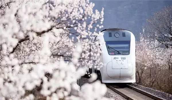何必远赴日本,北京这趟樱花专列只要6块钱,便能穿越粉红的浪漫花海![墙根网]