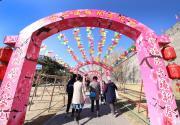 """2019北京明城墻遺址公園梅花文化節""""搶先看"""""""