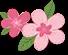 美了!美了!本周末上海各大赏花地花情速报[墙根网]