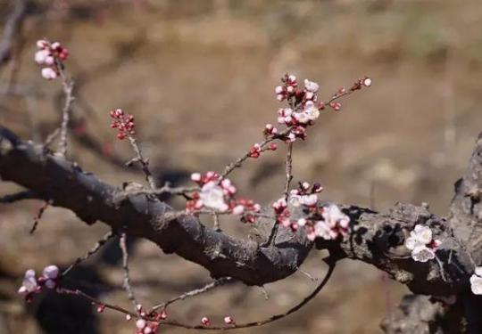 2019植树节  来顺义意大利农场,赴一场春的约会