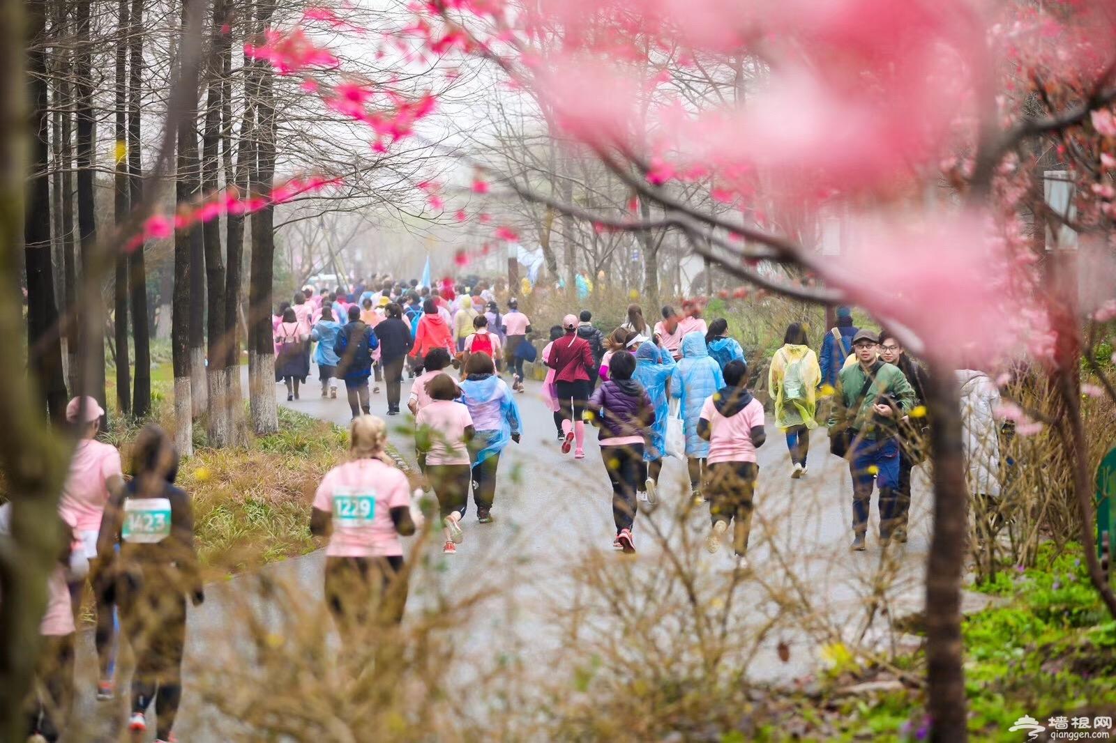 2019上海樱花节女子10公里精英赛举行[墙根网]